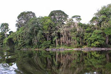 Rivier in het Amazonia regenwoud (4) van rene marcel originals