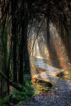 Magisch pad van Ruud Peters