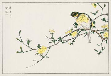 Japanische Ammer mit blühendem Zweig Illustration von Numata Kashu von Studio POPPY