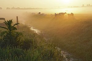 mistig landschap met opkomende zon met schapen langs een sloot