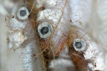 Drie vissen in ijs van Mascha de Lange