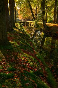 Herfst schaduw