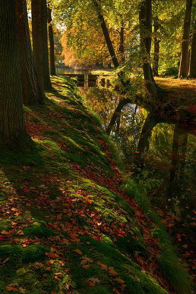 Herfst schaduw van Joris Pannemans - Loris Photography