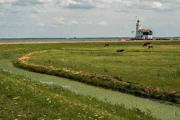 Paard van Marken in een Hollands landschap van Susan van der Riet