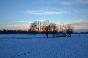 snow van Corinne Alferink