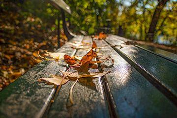 De bladeren van Central Park van Robert Sanders