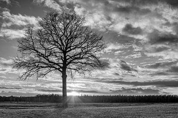 Ländliche Landschaft mit Baum in einem Feld und dramatischen Sonnenuntergang von Tony Vingerhoets