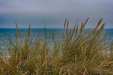 Duinen en strand van Surtainville van Peter Bartelings Photography