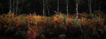 Wald-Panorama von Marcel van Balkom