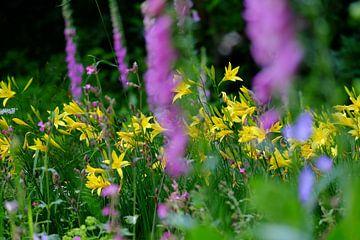 Mooi landschap van bloemen van Myrte Wilms