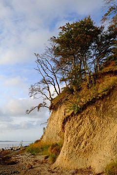 Boddenküste Rügens van Ostsee Bilder