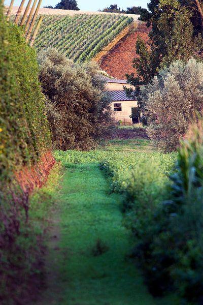 Pittoreske landbouw in het Noorden van Frankrijk van Peter de Kievith Fotografie