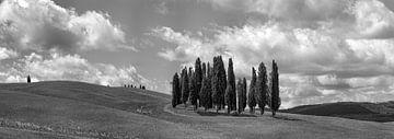 Monochrome Toskana im Format 6x17, Cipressi di San Quirico d'Orcia II