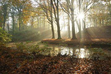 Bos in de herfst van Michel van Kooten