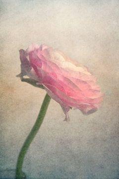 fragiele schoonheid van Claudia Moeckel