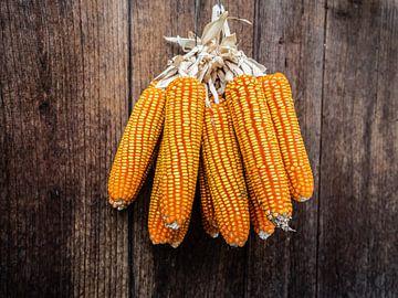 Maïs sur Stijn Cleynhens