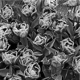 Dubbele tulp in beeldroman van Nora Verhoef