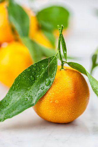 Verse mandarijn van