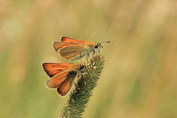 Butterflies sur Janine van Lagen