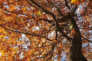 Herfst boom, kleurrijke bladeren