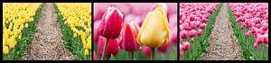 tulpen drieluik  van