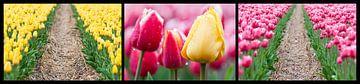 tulpen drieluik  van Fotografie Egmond