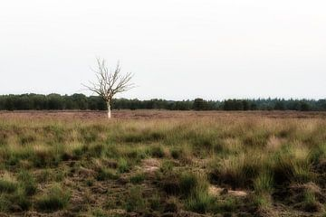 Eenzame boom op de heide van Maikel Brands