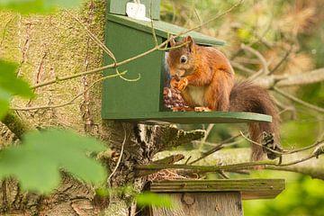 écureuil mangeur sur Karin Riethoven