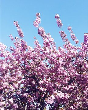 Bloeiende lente van Denise Vuurens