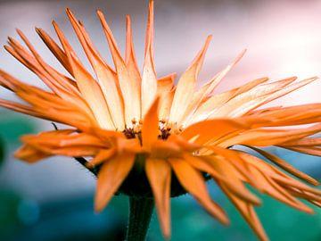Oranje Bloem Close-up Macro Fotografie van Art By Dominic
