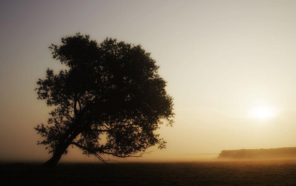 de westenwind boom van Yvonne Blokland