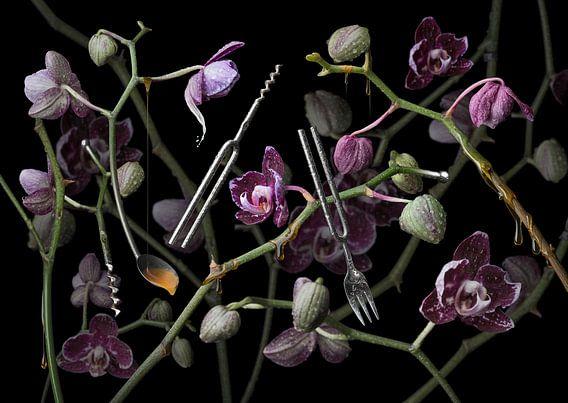 Orchidea diapasona van Olaf Bruhn