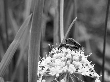 Käfer von Delphine Kesteloot