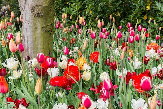 velden met wilde bloemen en tulpen