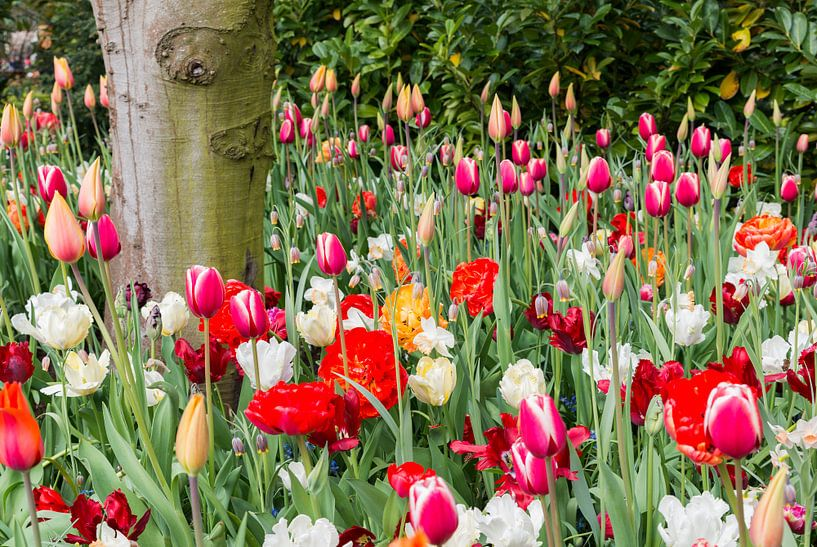 velden met wilde bloemen en tulpen van Compuinfoto .