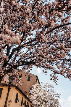Blühende Bäume in Italien von Dayenne van Peperstraten