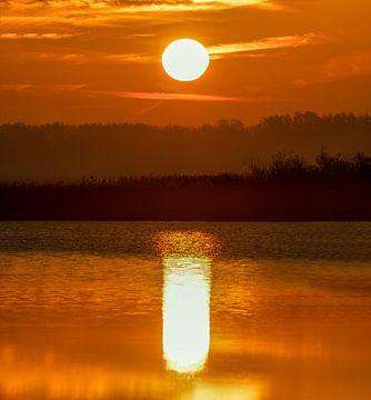 Sunrise in Oostvaardersplassen van Ben Bokeh