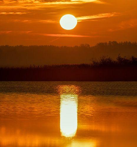Sunrise in Oostvaardersplassen van