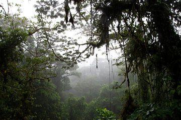 Nebelwald in Arenal von Bianca ter Riet