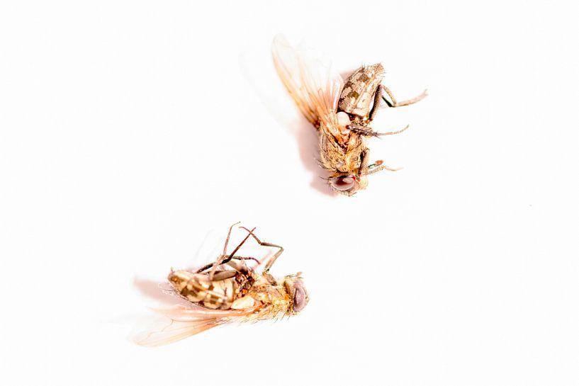 Tote Fliegen - Todesfliege von Ina Bouhuijzen