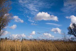 Typische wolken boven de uiterwaarden van de Lek.