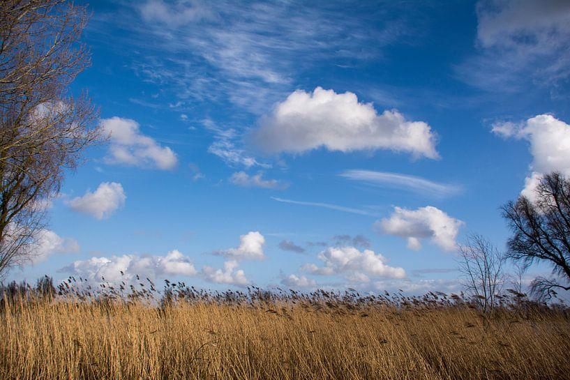 Typische wolken boven de uiterwaarden van de Lek. van Ton de Koning