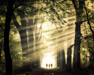Zauberhafter Spaziergang von