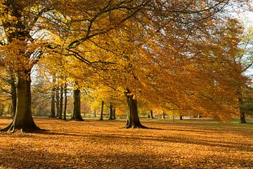 autumn in Holland van Marieke Treffers