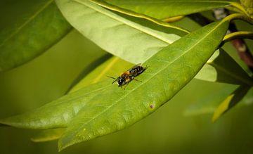 Insekt von Tomas S.