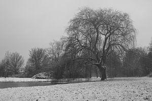 Winter treurwilg