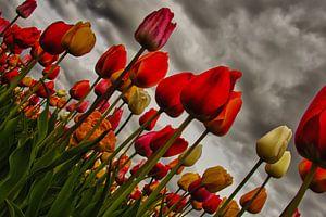 Daarom houden wij van tulpen