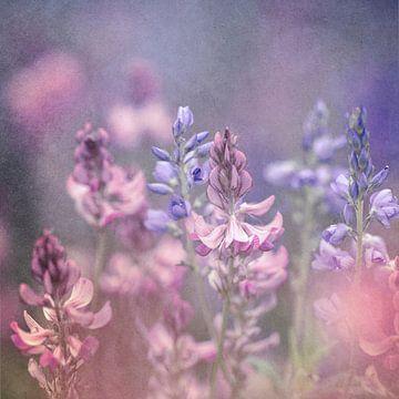 zomerkleuren van Daniela Beyer