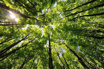 Blätter als Dach über dem Wald von Caught By Light