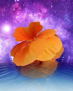 Éveil floral sur Gertrud Scheffler